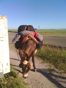 Un mulo pellegrino