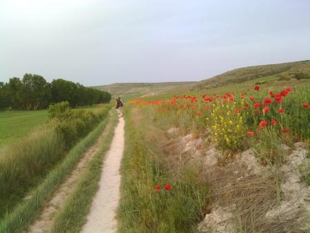 La partenza della tappa di oggi, in mezzo a papaveri rossi