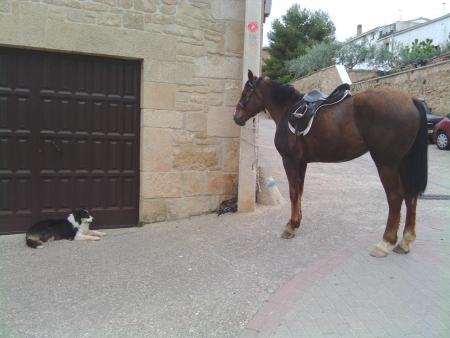 Cavallo al guinzaglio in un paesino nel cammino