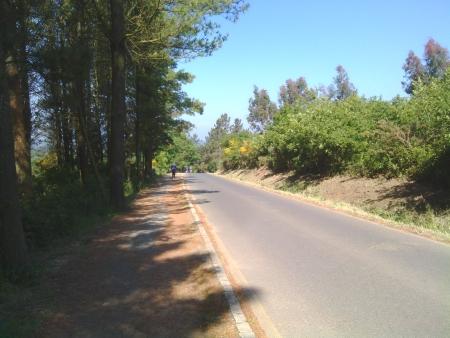 Il costante paesaggio di oggi, lungo la strada