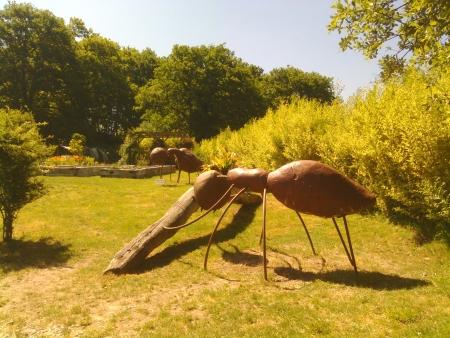 Formiche galiziane giganti